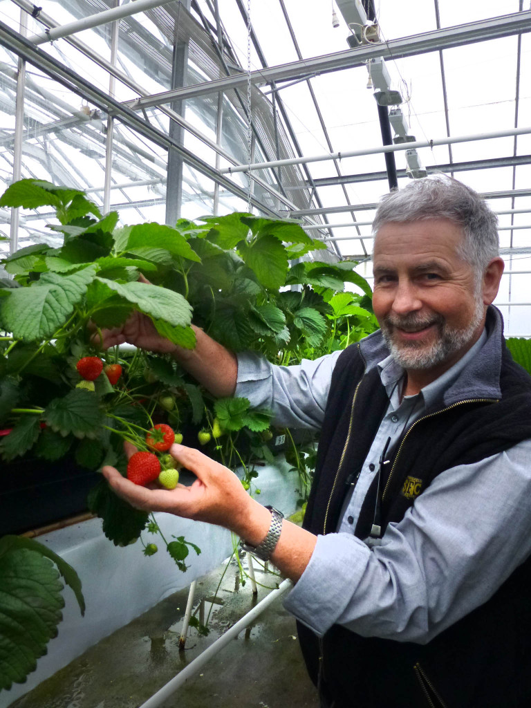 Jordbær 4 Åge Jørgensen med prod.klare planter ved Bioforsk Særheim.Foto Bioforsk