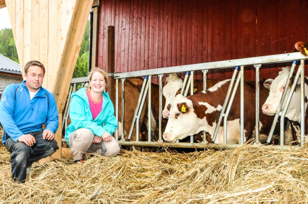 En midlertidig start. Før nyfjøset er ferdig startet Andreas og Ragnhild forsiktig med 12 dyr innkjøpt i 2015.